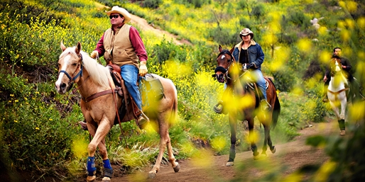 $39 & up -- Bandy Canyon Trail Ride w/Safari Park Views