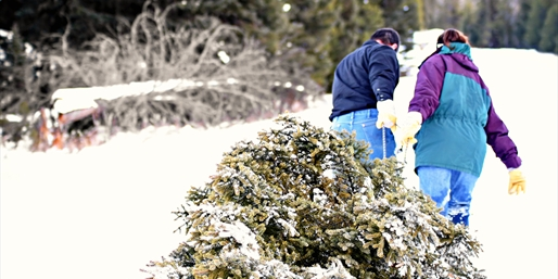 $55 -- Cut Your Own Christmas Tree & Visit Santa, Reg. $117