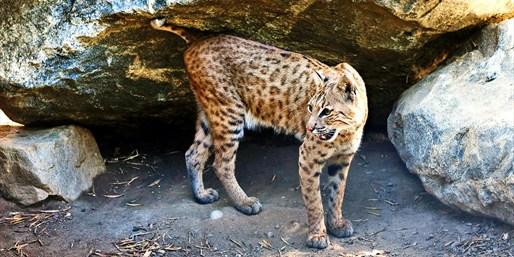 $7 -- 'Best of LA': Half Off Wildlife Day for 2
