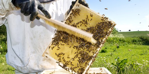 $45 -- Beekeeper for a Day: Hands-On Intro Course, Reg. $125