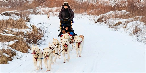 Dogsledding Adventure w/Husky Racing Team, Save nearly 60%