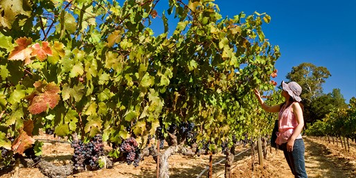 $20 -- Wine Tastings, Tour & Cheese for 2, 50% Off