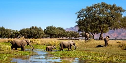 2999 € -- Safari mit Victoria Falls & Nationalpark, -1500 €
