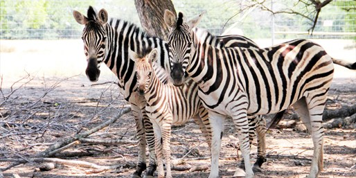 $10 -- Zebras, Camels & Kangaroos: Wildlife Ranch Day for 2