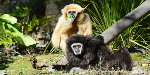 $7 -- Oakland Zoo: Half Off Admission to See 660+ Animals
