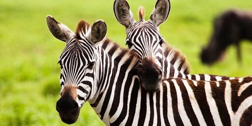 $45 -- Top-Rated Safari Tour, Reg. $75