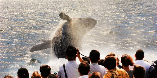 $21 -- Whale-Watching Trip from Point Loma, 50% Off
