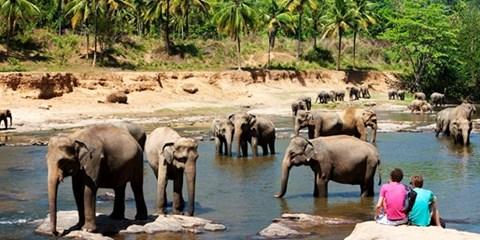 869€ -- Circuit de 13 jours au Sri Lanka depuis 4 aéroports