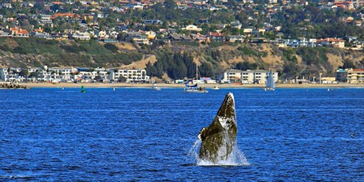 $19 -- Peak Season Whale Watching Off Dana Point, Reg. $45