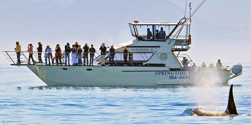 Whale-Watching Tour at 'Best Spot in North America'