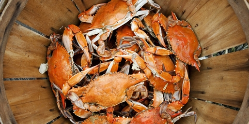 $99 -- Full-Day Crabbing Trip in Peak Season, Reg. $155