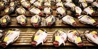 ¥508 -- 两人结伴走访东京筑地鱼市场 清晨出发 可观金枪鱼拍卖活动 体验当地市场