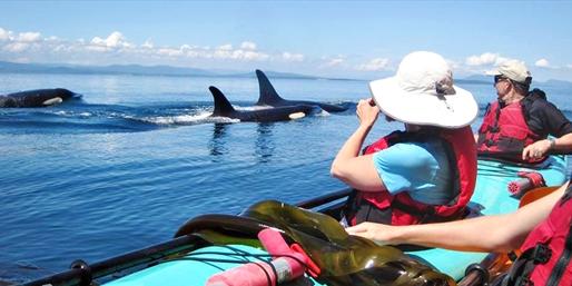 $49 & up -- San Juan Islands Kayaking & Whale Tours