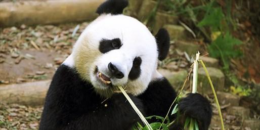 新加坡河川生态园坐落于新加坡动物