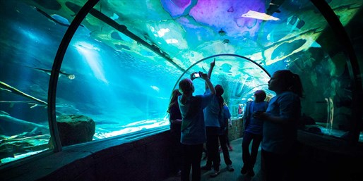 $15-$20 -- SEA LIFE Minnesota Aquarium, up to Half Off