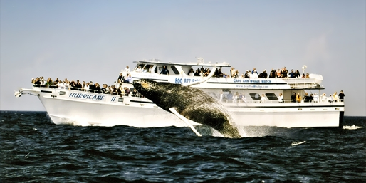 40% Off: Whale-Watch Cruise for 2 w/Take-Home Photo