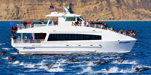 $15 -- Whale & Dolphin Cruise off San Pedro, 55% Off