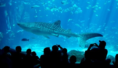 $74 -- Atlanta: 9-Day Pass to Top Attractions, Reg. $127