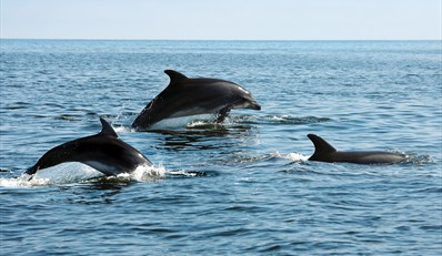 $15 -- Cape May: 2-Hour Dolphin-Watching Cruise, Reg. $30