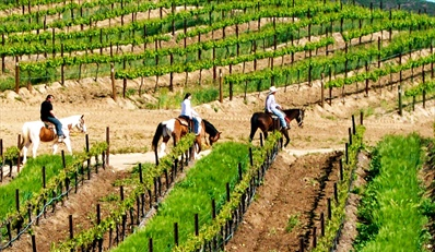 $59 -- Vineyard Horseback Ride w/Winery Tastings, Reg. $150