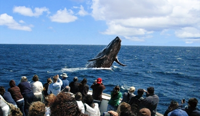 $39 -- Channel Islands Whales & Wildlife Tour w/Lunch