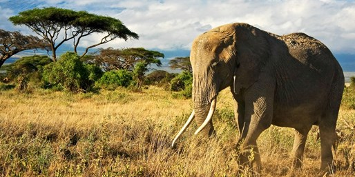 $3199 & up -- Kenya: 7-Nt. Wildlife Safari Trip w/Air