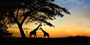 $2799 -- South Africa 11-Night Safari Vacation w/Air