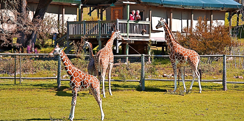 $169 -- Sonoma: Luxe Safari 'Glamping' Experience, Reg. $250