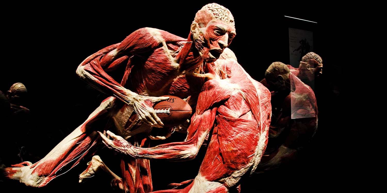$13-$17 -- 'Body Worlds: Pulse' in Times Square, 40% Off