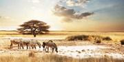 ab 1999 € -- Große Südafrika-Rundreise mit Ausflügen