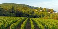 198€ -- Route des Vins : 3 jrs Œnotourisme avec dîner, -40%