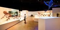 Houston Museum of Natural Science & 'Amber Secrets' Exhibit