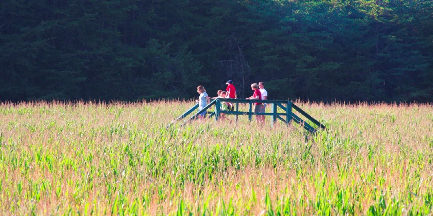 $11 -- Best Corn Maze & Tram Train Ride for 2, 50% Off