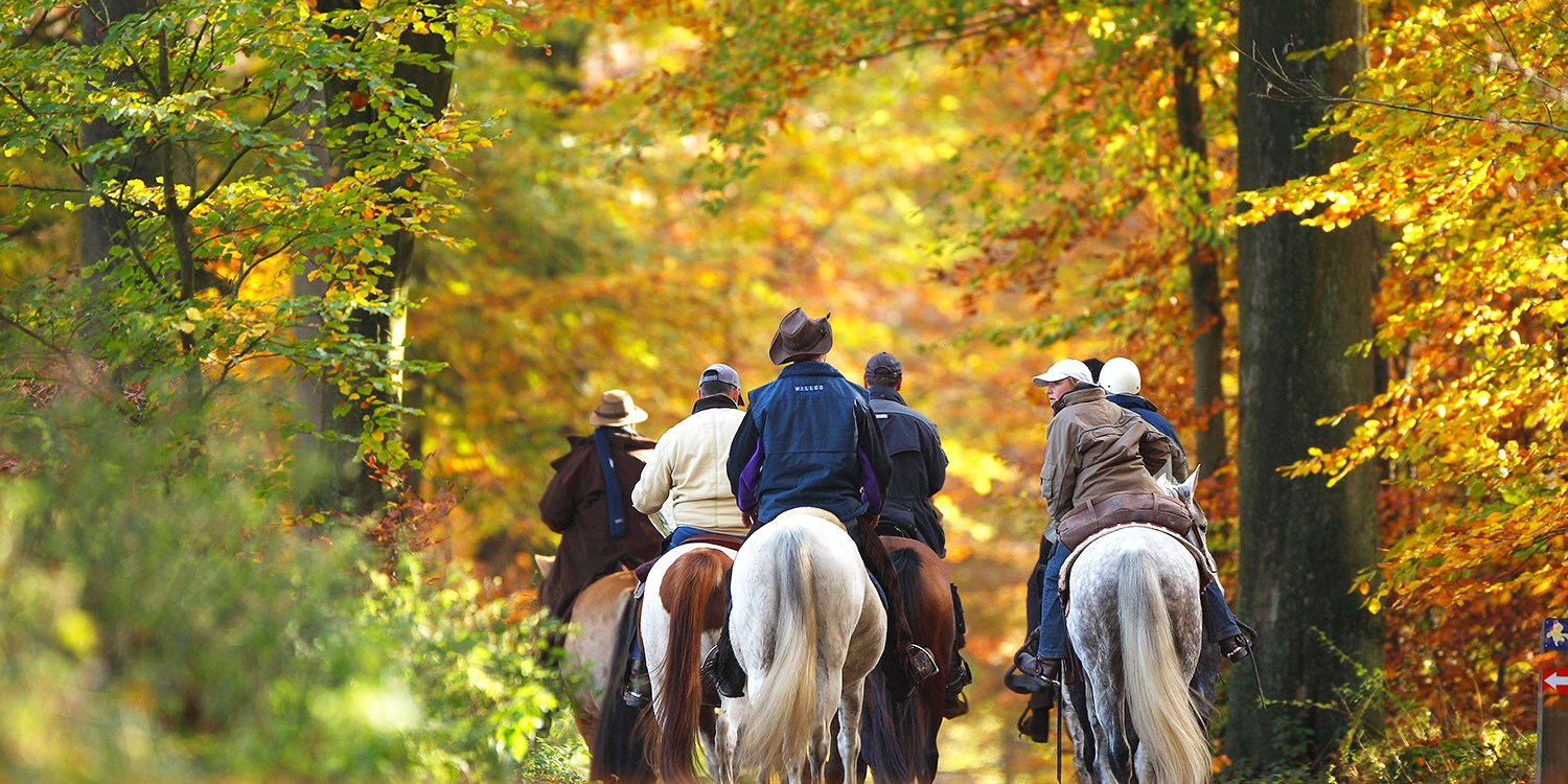 $35 -- Fall Foliage Horseback Trail Ride, Reg. $60