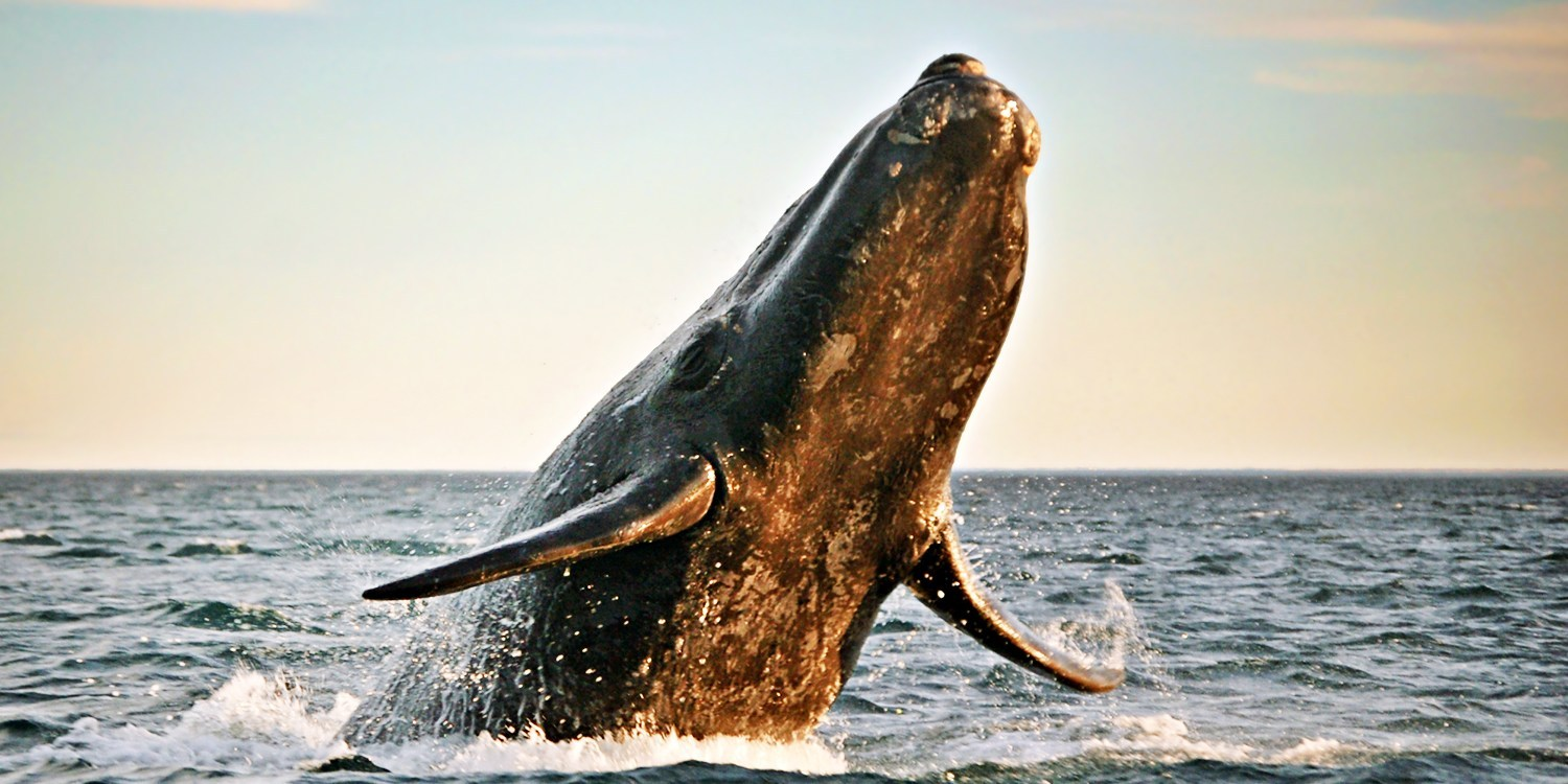 $23 & up -- Half Off Whale-Watching Tours thru Summer