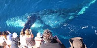 $11 -- Newport: Whale Watching During Migration Season
