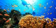 $490 起 -- 63 折 夏日水肺潛水體驗 連導師裝備 潛入海底世界 尋珊瑚小丑魚