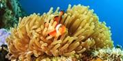 $380 起 -- 半價!潛水新玩法 新興 Zuba Diving 體驗連裝備 零負擔賞珊瑚景色