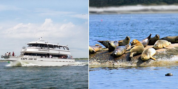 $25 -- Family-Friendly Seal-Watching Cruise for 2, 50% Off