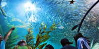 Aquarium of the Bay: Visit Any Day of 2017, Reg. $25