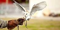 £18 -- Half-Day Falconry Experience, 64% Off
