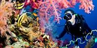 $199 -- Open Water Scuba Certification w/PADI Diver Card