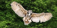 £15 -- 2-Hour Hands-on Birds of Prey Experience, 77% Off