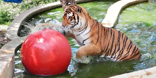 $15 -- Austin Zoo: Admission for 2 Adults & 2 Kids, Save 50%