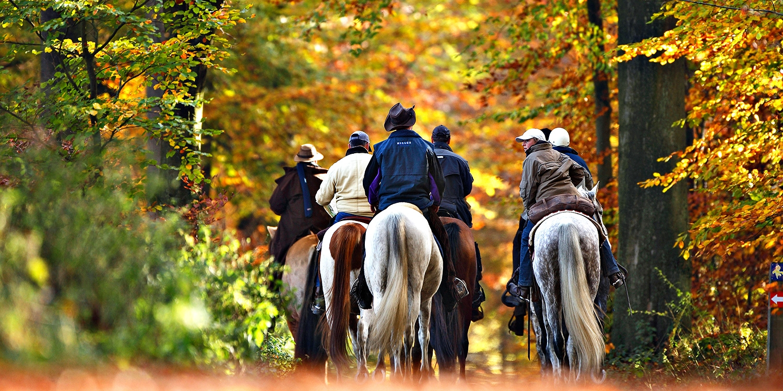 $29 -- Fall Hudson Valley Horseback Ride, Save 55%