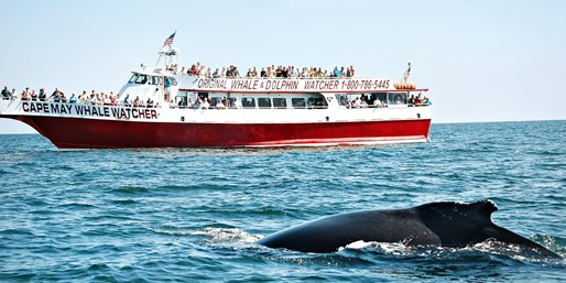 $25 -- Cape May Dolphin- & Whale-Watching Cruise, Reg. $40