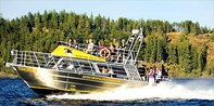 $65 -- Vancouver Island Whale & Wildlife Cruise, Half Off
