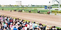 $19 -- Gulfstream Park: Day at the Races w/Lunch, 55% Off