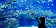 World Aquarium: Discovery Adventure Tour for 2 or 4