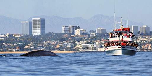 $20 -- Whale-Watching Trip for 2 off Newport Coast, Reg. $72